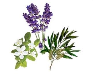 Floral Waters / Hydrosols